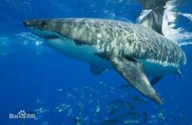 10 động vật nguy hiểm nhất thế giới