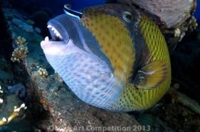 Ảnh sinh vật đại dương ấn tượng nhất năm