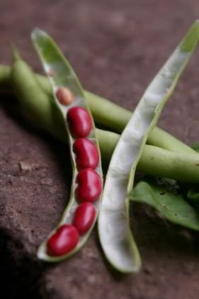 Món ăn chữa bệnh từ đậu đỏ