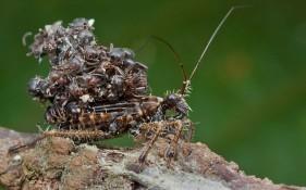 Nghệ thuật ngụy trang tài tình của sát thủ bọ rệp