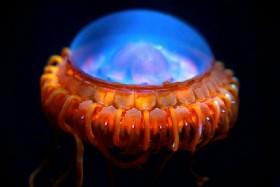 Những động vật biển giống 'người ngoài hành tinh'