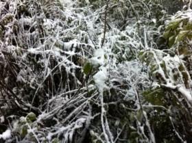 Sa Pa dưới 0 độ, tuyết rơi trắng xóa