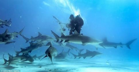 Khoảnh khắc đối mặt với sát thủ đại dương