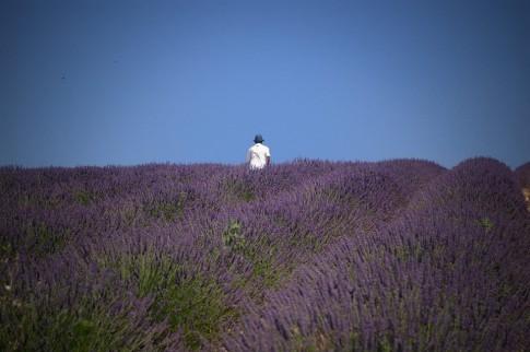 Những cánh đồng hoa đẹp nức lòng dân phượt.