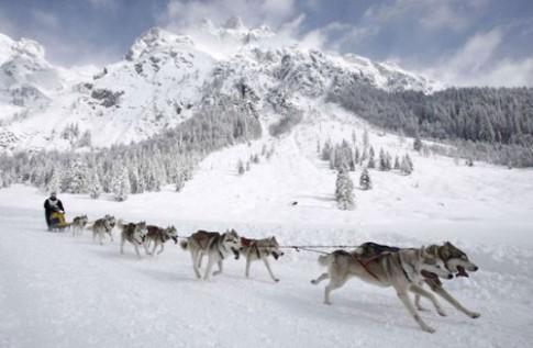 Thú vị hơn khi du lịch trượt tuyết bằng xe kéo chó