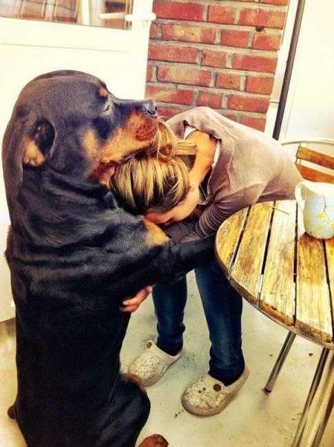 24 khoảnh khắc đầy yêu thương giữa con người và những chú chó