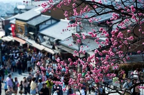Bộ ảnh mùa hoa anh đào nở rực rỡ đẹp nao lòng người tại Nhật Bản