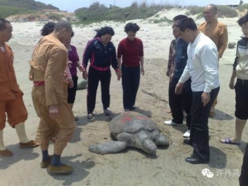 Chú rùa biển được phóng sinh, 16 năm sau cứu mạng trả ơn!