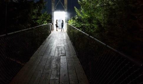 Khu rừng kì ảo mà ai cũng nên đi qua một lần trong đời