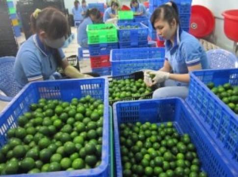 Kiếm tiền nhờ xuất khẩu chanh tươi