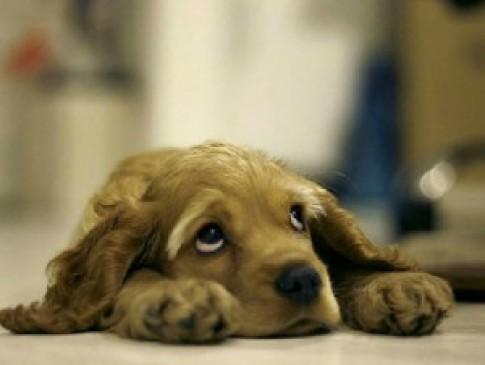 Lòng tự trọng của loài chó