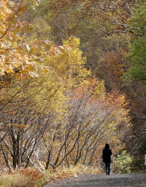 Mùa thu trên núi Phú Sĩ