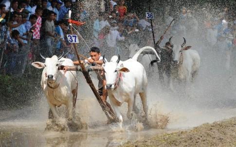Những hình ảnh mới nhất về Lễ hội đua bò 2014