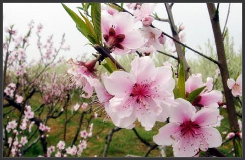 Những mùa Xuân tươi mới, thật hiền...