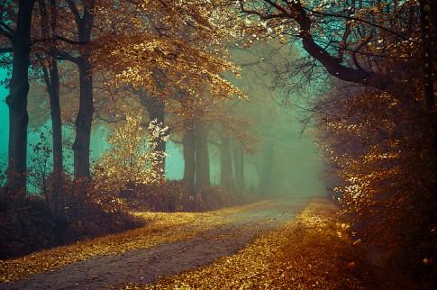 Tháng 8 mùa thu - Mùa của tình yêu ♥