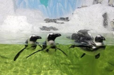 Thủy cung lớn nhất Việt Nam có chim cánh cụt