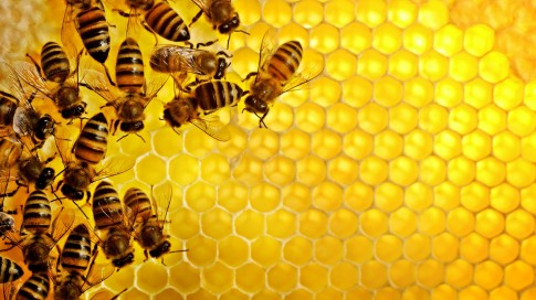 1 phút để phân biệt mật ong thật, giả