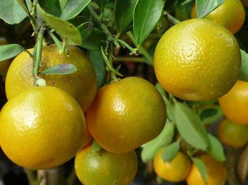 7 loại thảo dược giúp phòng và chữa bệnh đường hô hấp