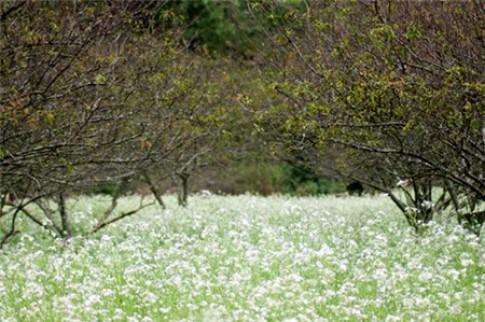 Biker du ngoạn chiêm ngưỡng vẽ đẹp mùa hoa nở