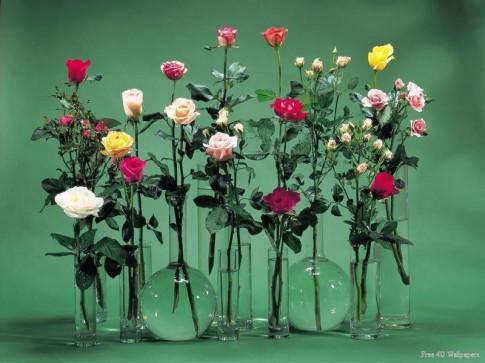 Cắm hoa theo phong thủy trong ngày Tết
