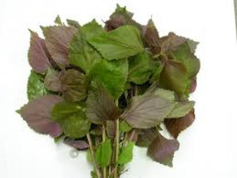 7 tác dụng chữa bệnh của cây tía tô