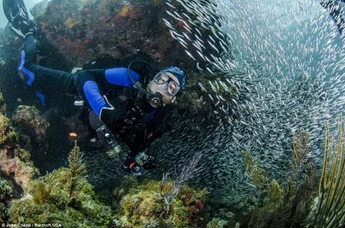Ảnh đẹp kỳ thú dưới đáy biển