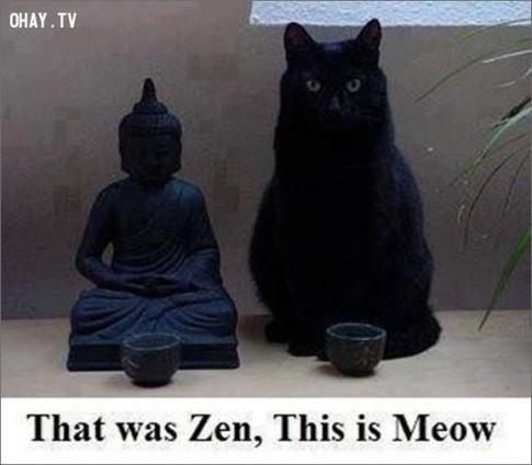 13 điều chúng ta học được từ loài mèo