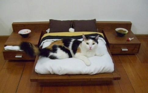 Cuộc sống sang chảnh của 20 chú mèo quý tộc khiến ai cũng phải nguỡng mộ