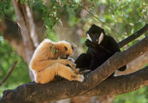 Du lịch sinh thái ở vườn quốc gia Bến En