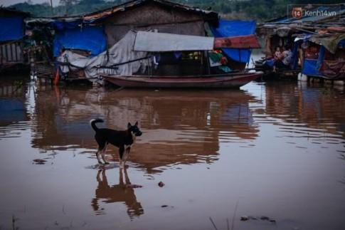 Hà Nội: Mùa cỏ lau nở rộ bên cây cầu Long Biên lịch sử