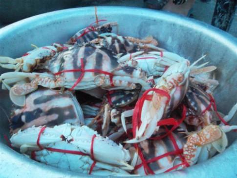 Quà giản dị từ biển Sầm Sơn