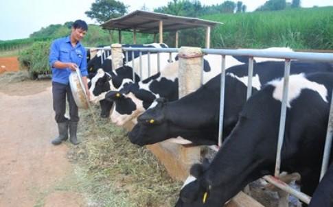 Sữa tươi thực phẩm nguy hiểm nhất thế giới?