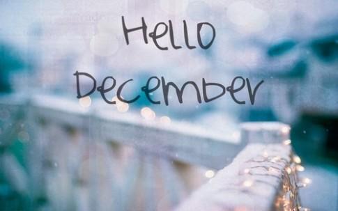 Tháng 12, tháng của len và những con mèo...