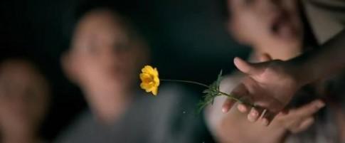 """""""Tôi Thấy Hoa Vàng Trên Cỏ Xanh"""": Xem xong thấy tâm hồn mình nhẹ nhõm..."""