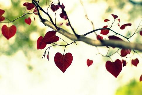 Yêu một người đủ dùng...