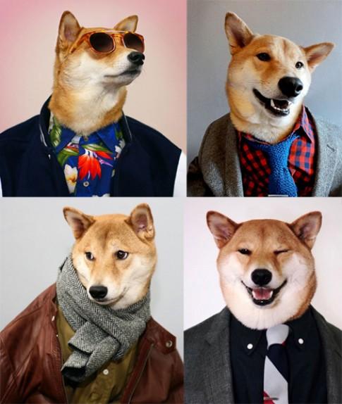 Làng thời trang thế giới xôn xao vì chú chó sành điệu