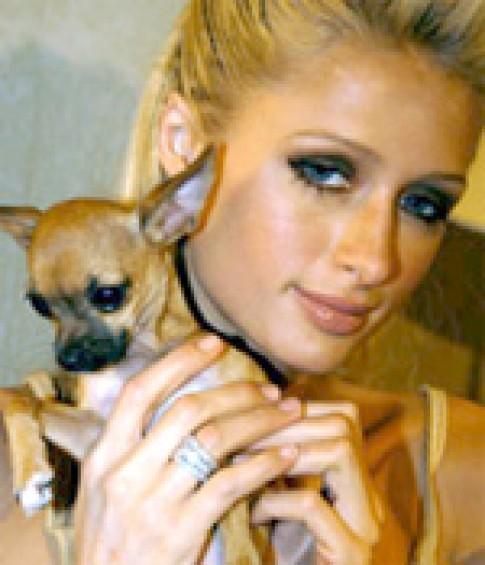 Paris Hilton thiết kế vòng cổ cho chó