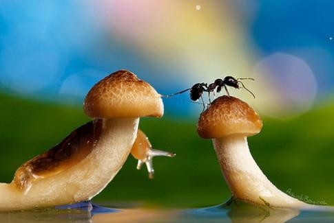 Chụp ảnh 'thế giới thần tiên' với rau củ và túi nilon