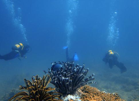 Cơ hội khám phá sự sống dưới lòng biển sâu