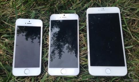 iPhone 6 có thể được bán ra ngày 14/10
