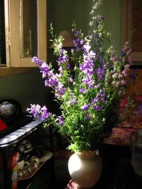 Những loài hoa cắm Tết của một Hà Nội xưa cũ, bạn có nhớ tên?