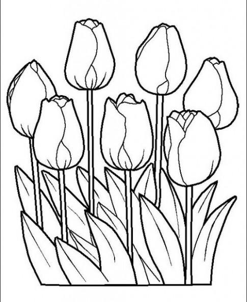 Tranh tô màu 'Những bông hoa tulip'