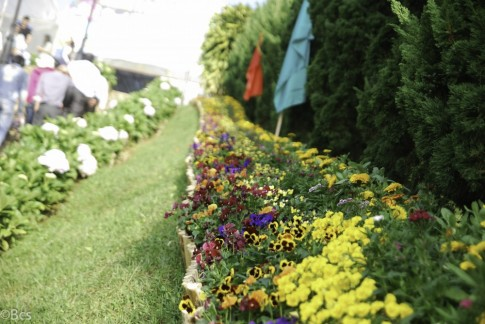 Vi vu Đà Lạt mùa này rực rỡ ngàn hoa