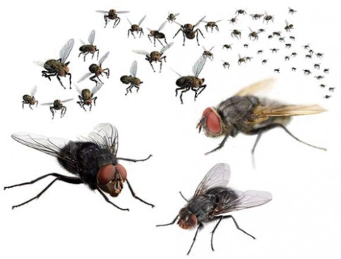 10 cách đơn giản để đuổi ruồi khỏi nhà