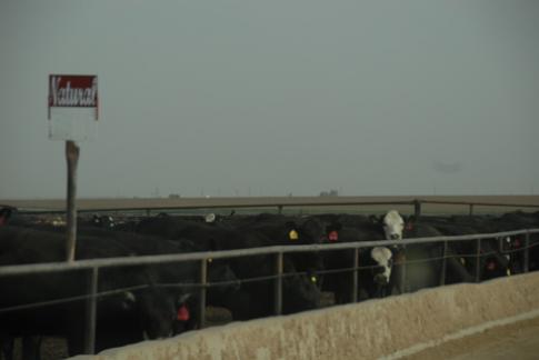 Aging Black Angus Beef - thịt bò kiểu Mỹ