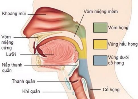 Ăn nhiều dưa cà muối nguy cơ mắc ung thư vòm họng