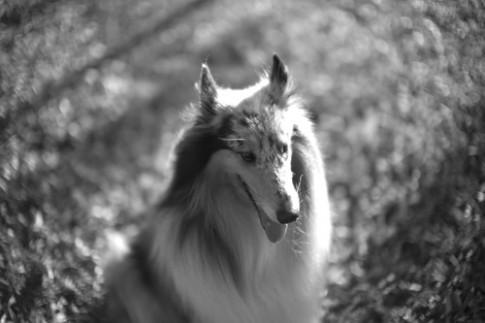 Ảnh chụp thử từ Leica M-Monochrom