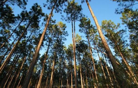 Apple mua lại một khu rừng lớn gấp đôi đảo Manhattan