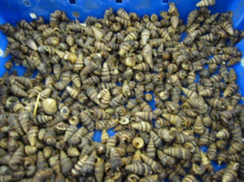 Béo giòn ốc len hầm dừa