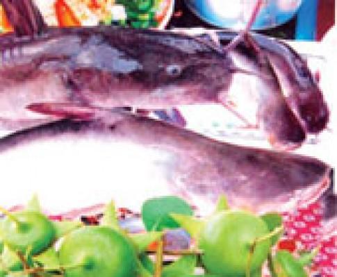 Cá ngát nấu bần